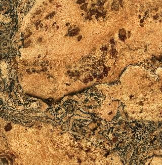 Cork Flooring Natural Burl With Charcoal Swirls World